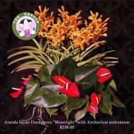 Aranda Moonlight with Anthurium andreanum