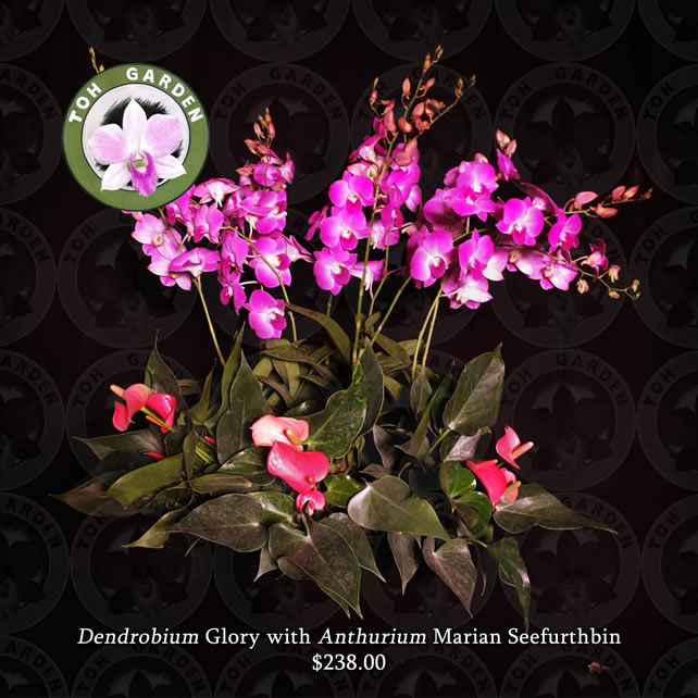 Dendrobium Glory with Anthurium marian seefurth