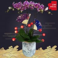 2020 CNY Special Purple Phalaenopsis Orchid (5 in 1)
