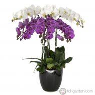 Phalaenopsis Two Tier Arrangement (6 in 1)