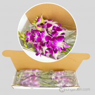 Dendrobium Giftbox (20-40 stalks)