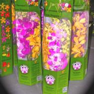Origami Orchid Giftbox (8 stalks)
