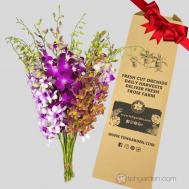 Dendrobium Mix Giftbox