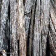 Vanilla tahitensis Beans