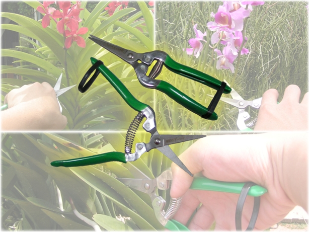 Pruning Shears/Cutter (Single)