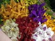Fresh Mokara Orchid Bouquet (SS05)