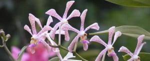 aranda-hildea-galistan