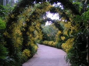 The Golden Shower Arch in National Orchid Garden..
