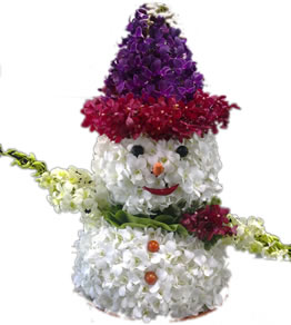 Orchid Snow Man