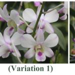 Creating Variations via Self Pollination