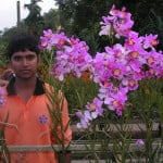One of our worker posed with the Vanda Teres Hybrid for scale