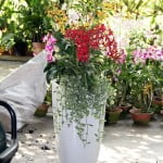 Customized Orchid Planter