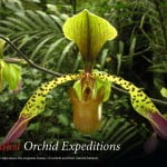 Orchid Expeditions 2014