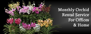 Monthly Orchid Rental Service for Homes & Office