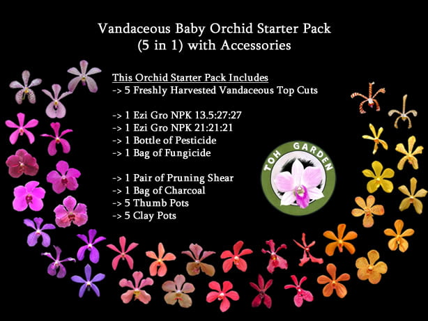 Vandaceous Baby Orchid Starter Pack for Home Growers (5 in 1) with Accessories