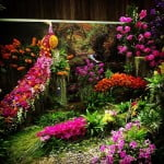 Orchid Show