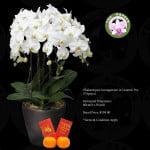 Phalaenopsis White (5 in 1)