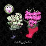Dendrobium in High Heel