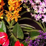 Orchid & Plant Arrangements