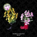 Oncidium in High Heel