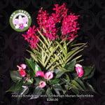 Aranda Strawberry with Anthurium andreanum