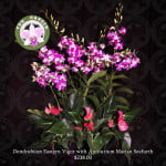 Dendrobium Eastern Vigour with Anthurium Marian Seefurth