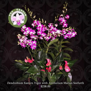 Dendrobium Eastern Vigour with Anthurium Marian Seefurth