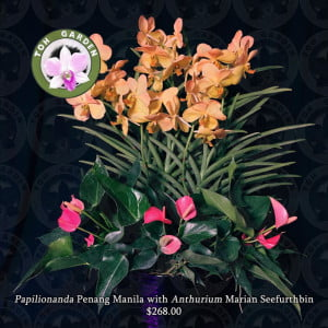 Papilionanda Penang Manila with Anthurium Marian Seefurth