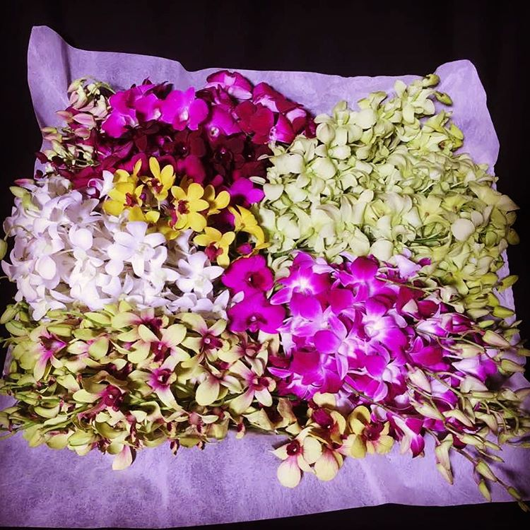 Dendrobium Orchid Giftbox (40 stalks)