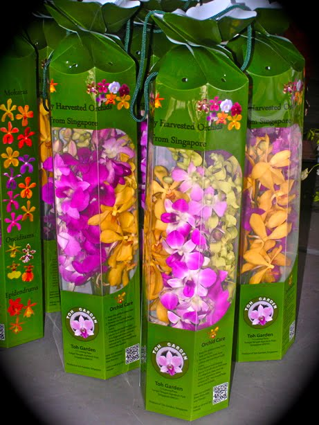 Assorted Orchid Giftbox