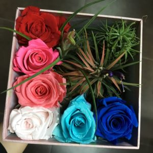 Preserved Rose & Airplant (L)