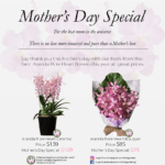 Mother's Day Orchid Special