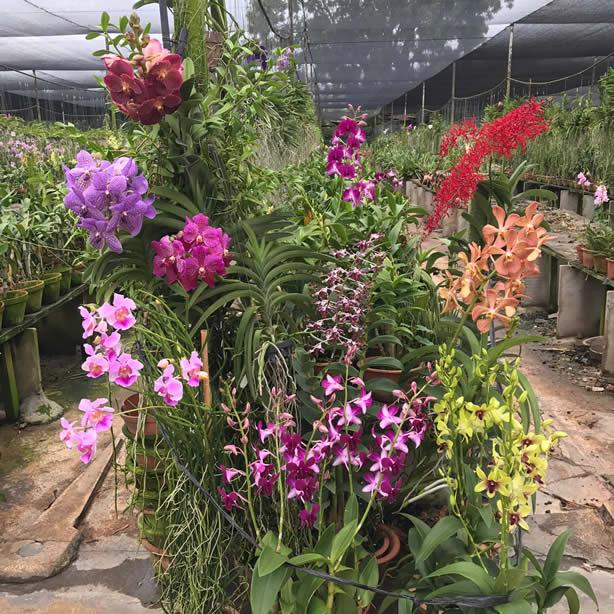 OSSEA Orchid Show@Hortpark