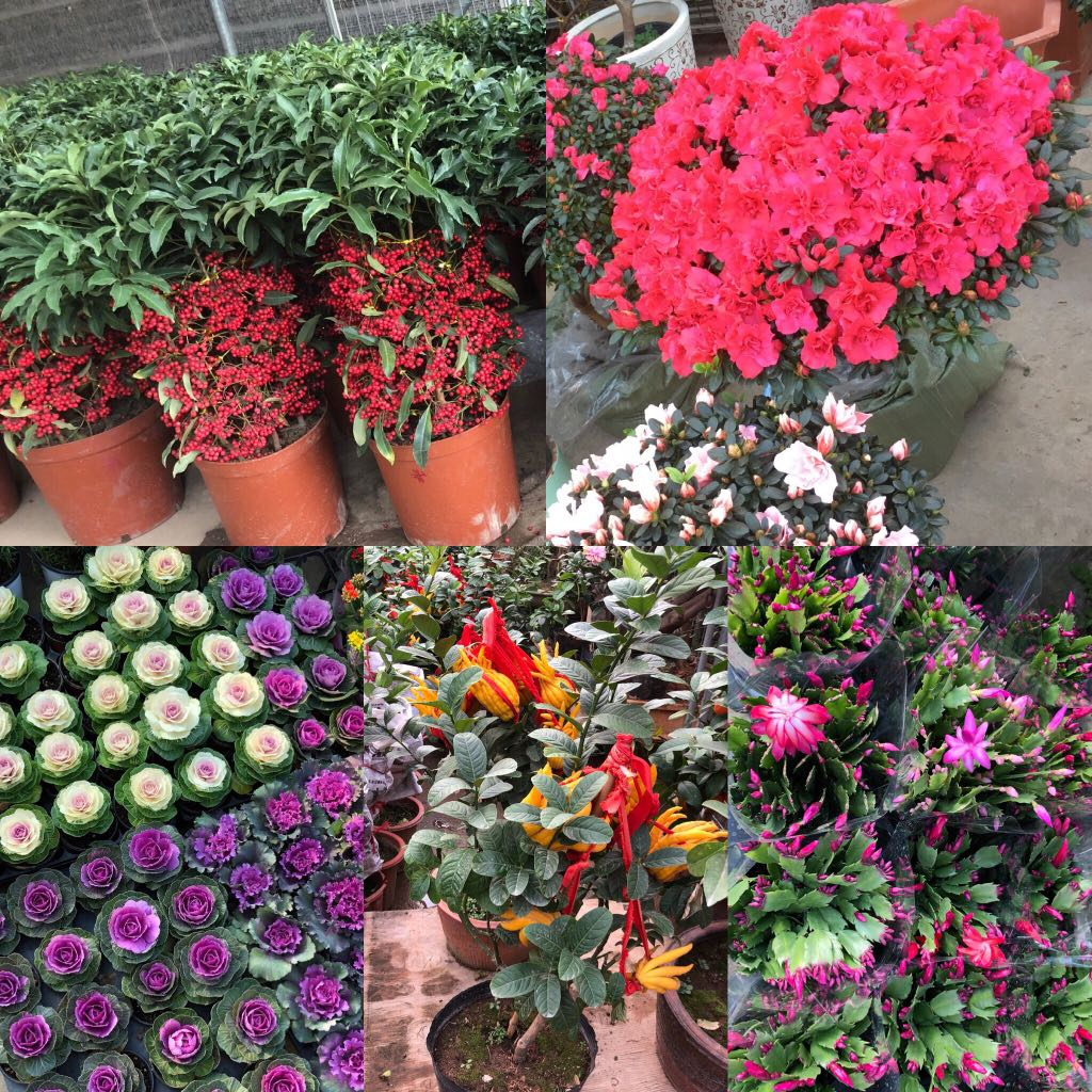 Other ornamentals