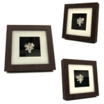 999 Silver dipped Real Orchid in Classic brown frame.