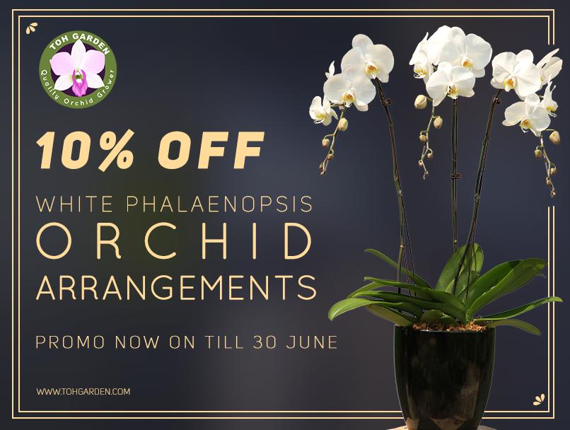 It's June! Enjoy 10% off All White Phalaenopsis Arrangements! Valid till 30 June 2018