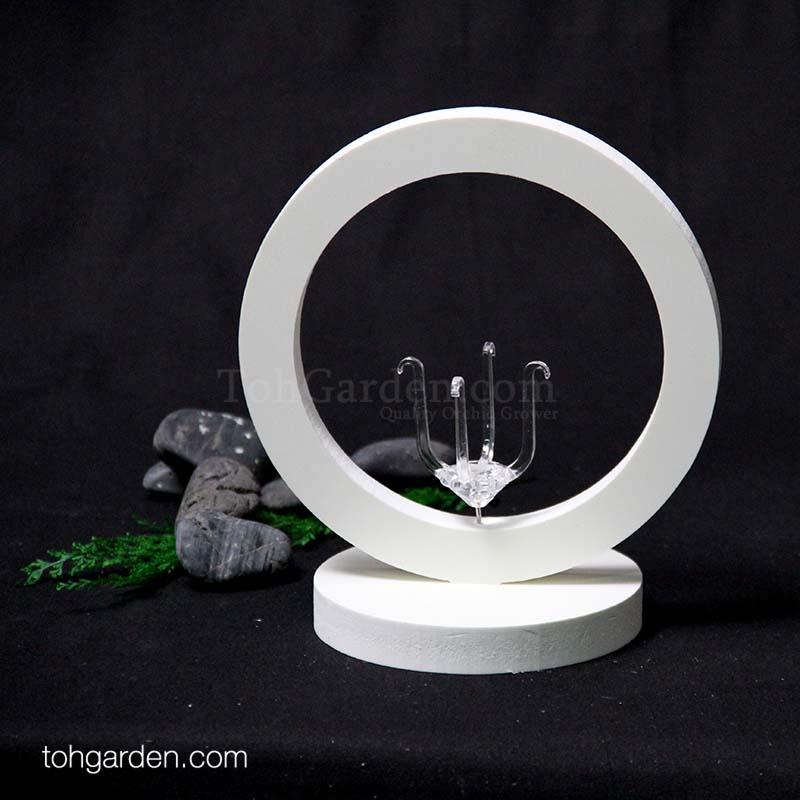 Design G: Ring Wooden Air Plant Holder