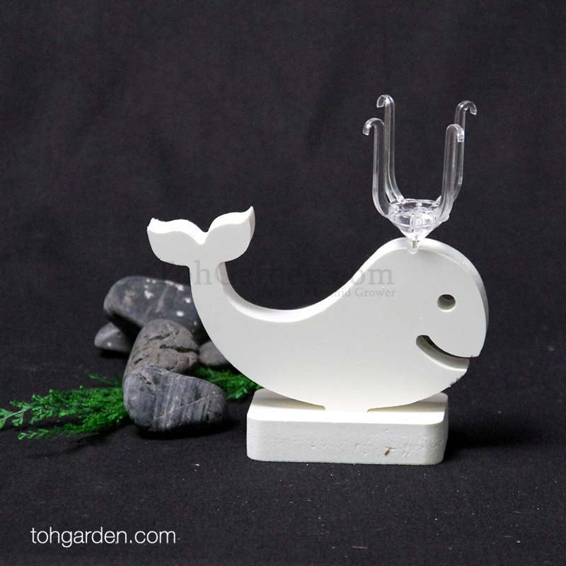Design F: Whale Wooden Air Plant Holder