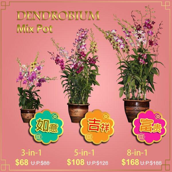 Traditional CNY Dendrobium Mix Pot