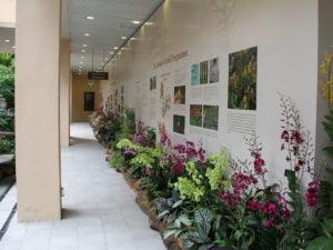 botanic gardens (2)