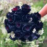 scarlet_black