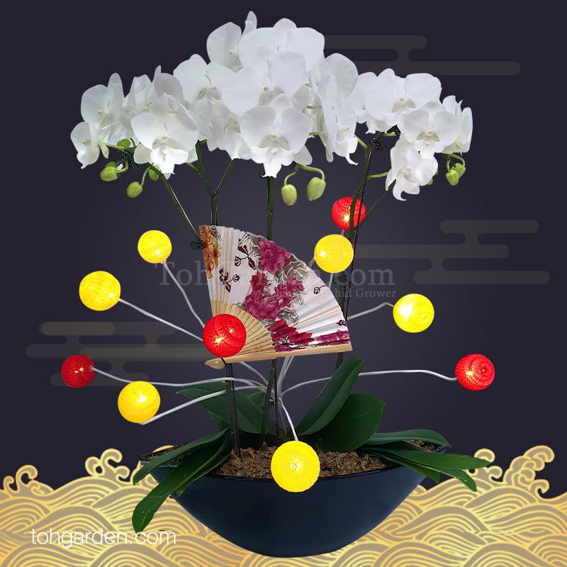 2020 CNY YiFanFengShun Phalaenopsis With Decorations