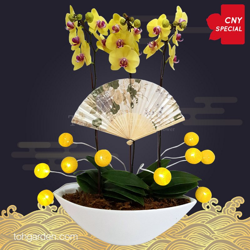 2020 CNY Special Yellow Phalaenopsis Orchid
