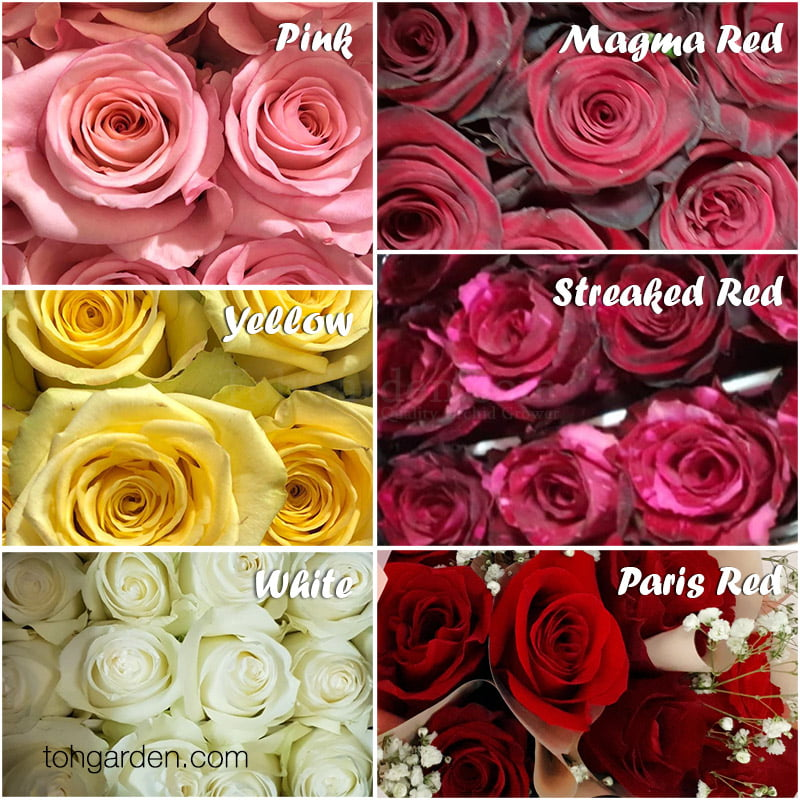 2020 VDay Custom Rose Bouquet Preorder by 10 Feb 2020