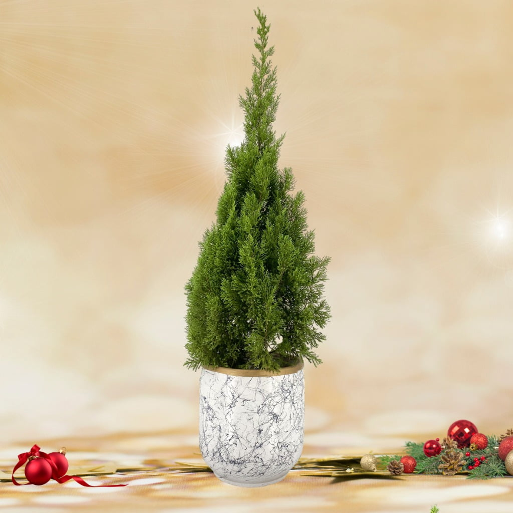 Christmas Tree (1.40m) in Modern Marbled Pot