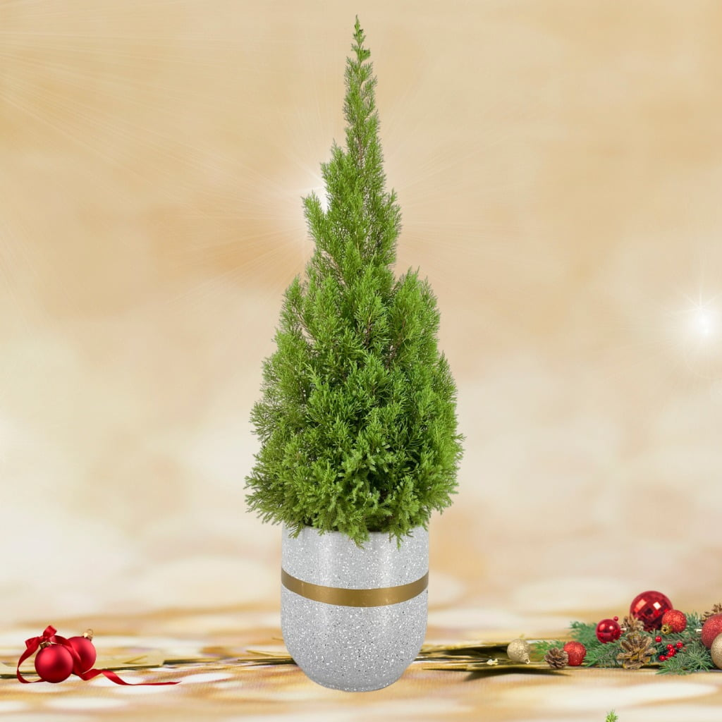 Christmas Tree (1.40m) in Modern White Cement