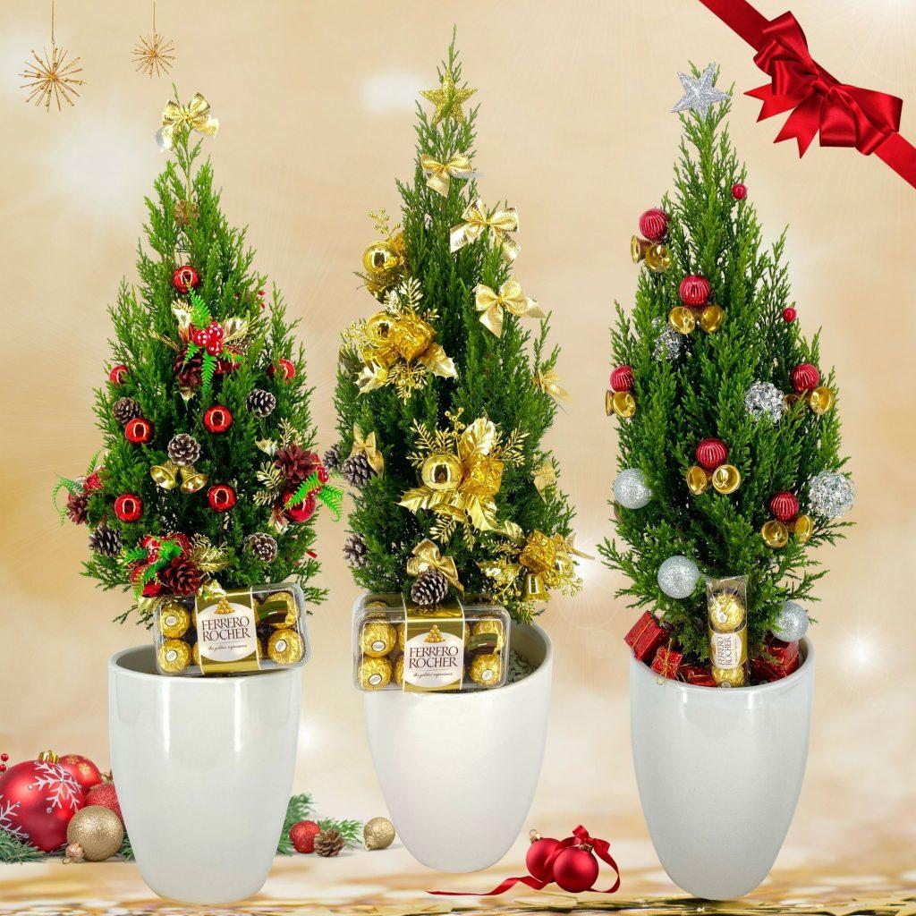 Christmas Pine Trees 2020