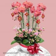 CNY Phalaenopsis Special Arrangement (10 in 1)