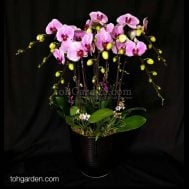 OX Pink Phalaenopsis with mini Dendrobiums Arrangement (8-in-1)