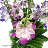Artificial Aerides Blue & Pink